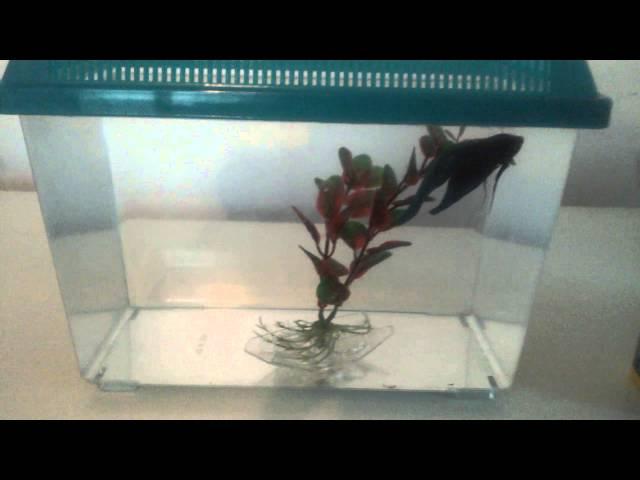 Walmart Betta Fish One Gallon Tank
