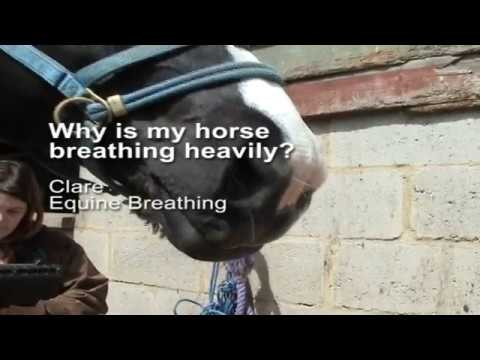 Why is my horse breathing heavy (or fast, hard or loud)?
