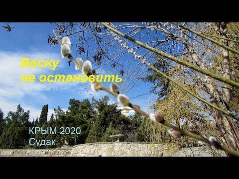 Крым 2020, Судак сегодня 7 марта. Весна пришла: котики, цветы, лебеди