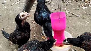 What can be made from plastic bottles  Chicken feed tank