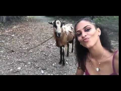 Jovem faz selfie com bode e leva chifrada