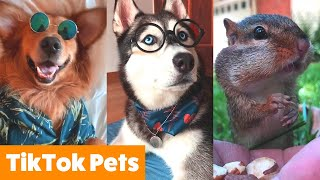 Cutest TikTok Animals To Make You Smile | Funny Pet Videos
