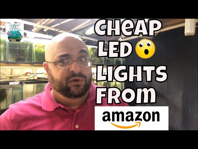 Cheap LED Lights for the Fish Room Red Grass Guppy Fish and Blue Grass Guppy Aquarium Fish Room VLOG