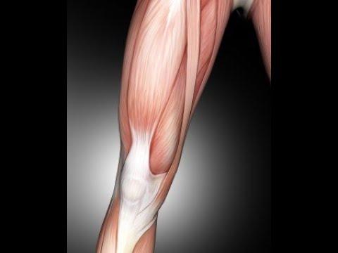 Artroscopia al ginocchio Corsi