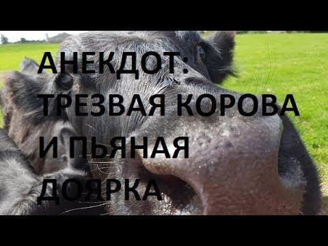 Анекдот про трезвую корову и пьяную доярку