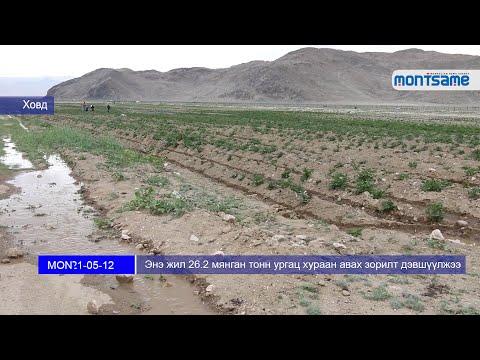 Энэ жил 26.2 мянган тонн ургац хураан авах зорилт дэвшүүлжээ