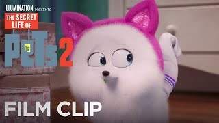 The Secret Life Of Pets 2   Clip: Cat Lessons - Now on 4K, Blu-ray, DVD & Digital   Illumination