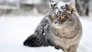 The Wonderful World of Cats - HD Nature Wildlife Documentary