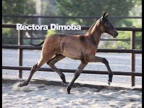 Rectora Dimoba (Publicado el 17-6-2018)