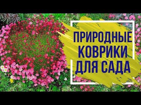 Лучшие Почвопокровные многолетники 🌸  Почвопокровные растения