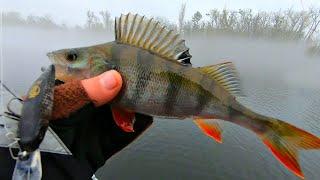 Рыбалка в киеве на сегодня