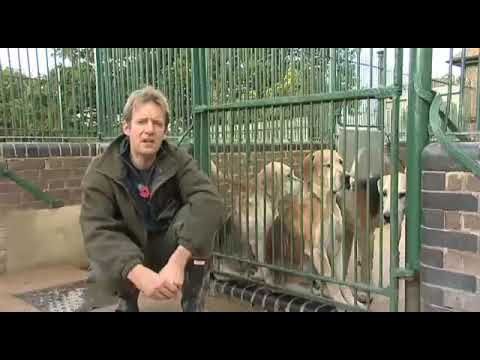 Fieldsports Britain – Hounds, first trout, and recycling cartridges – episode 7