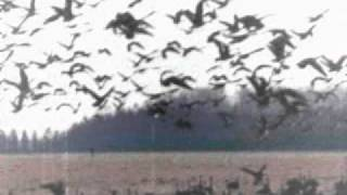 Appart - birds