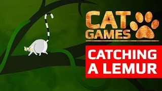 CAT GAMES - CATCHING A LEMUR (VIDEOS FOR CATS TO WATCH) 60FPS