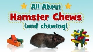 All About Hamster Chews (and chewing)