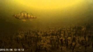 Озеро андреевское тюмень рыбалка как проехать