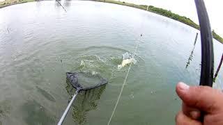 Рыбалка на дону в багаевке базы отдыха