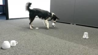 """Der """"Tassenhund""""  die vierte und fünfte"""