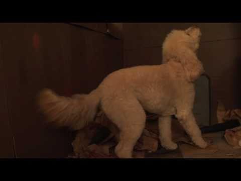 Canine Cinema: Star Wars IV - Trash Compactor Scene
