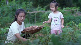 Video : China : Mung bean 绿豆 pastries