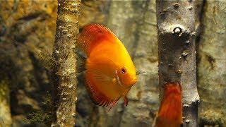 HOW TO Start An Aquarium In 8 Ways