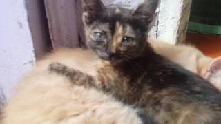 Милые котята!:-)