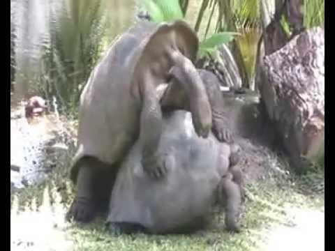 Moglie ha sesso con il suo video amante e marito