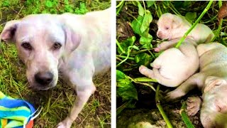 RescueTerrified Mama Tried To Find A Safe Place For Her Puppies