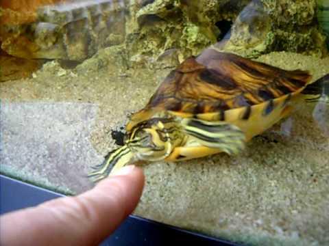 Cosa dovrei fare per divertire la mia tartaruga yahoo for Lago tartarughe