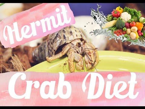 Hermit Crab Diet: What I Feed My Crabs Daily 🐚🦀 Lori's Hartland