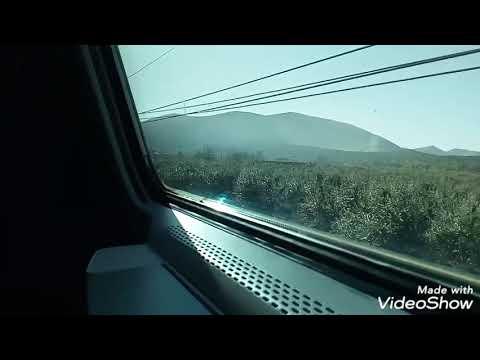 Sesso video animale umano