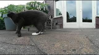 кот в 360 градусов видео