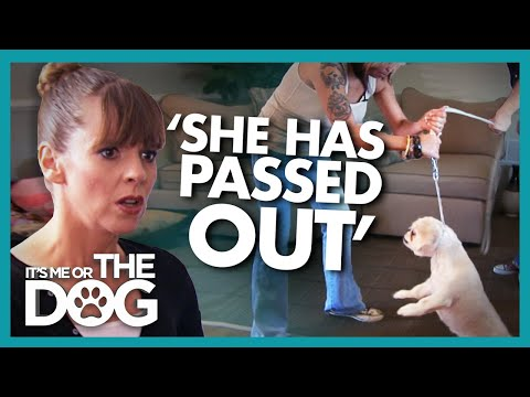 Harsh Punishments with Choke Chain is Making Dog Faint | It's Me or the Dog