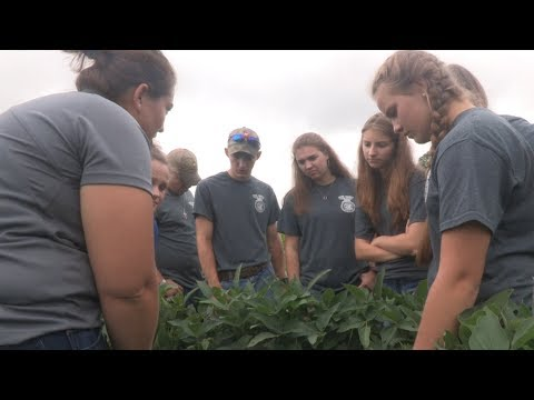 Students experience agronomy through crop scouting competition