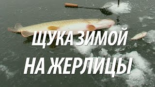 Живец для рыбалки в ростове-на-дону
