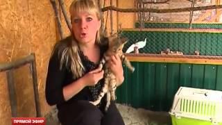 Первый сельский зоопарк открылся в Николо-Павловском