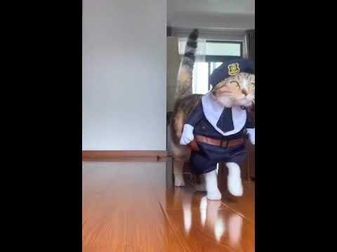 Modieuse katte op die loopplank