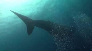 Nuestros Mares - Corrientes marinas