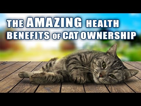 Amazing Health Benefits Of Cat Ownership