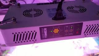 bc northern lights bloom box with optic led optic 2