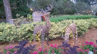 Christmas Reindeer,  Decorations & Lights in Trees at Long Cove Club! Hilton Head Island, SC