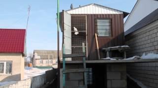 Николаевские голуби. Калугин Николай