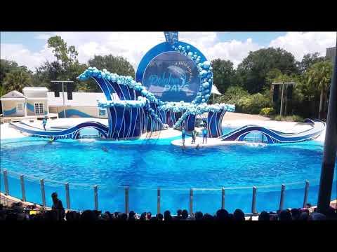 Dolphin Show Seaworld Orlando FL Theme Park August 7, 2017