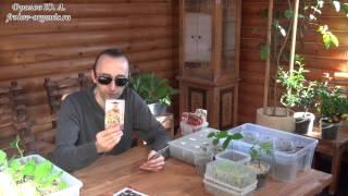 Томаты. Выращивание Томатов. Рассада Томатов. Контейнеры для рассады томатов. От Фролова Ю. А.