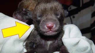 Abandoned 'Puppies' This Man Finds In His Garden Are Really Something Else Entirely