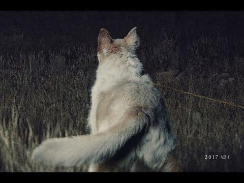 Llega de noche - La segunda película de Trey Edward Shults es un thriller de terror psicológico