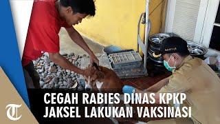 Cegah Rabies, Dinas KPKP Jaksel Lakukan Vaksinasi Hewan