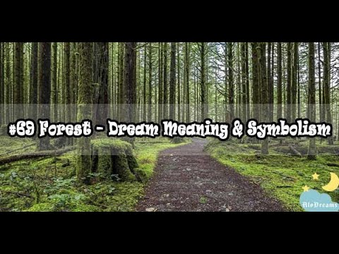 Dreams about Forests - Meaning and Interpretation
