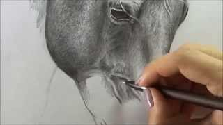 Horse (Drawing pencil)