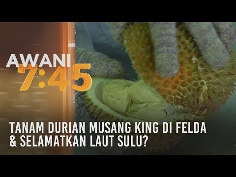 Tumpuan AWANI 7.45: Tanam durian musang king di Felda & selamatkan laut Sulu?